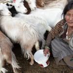 Soucasny Tibet ocima Tibetana